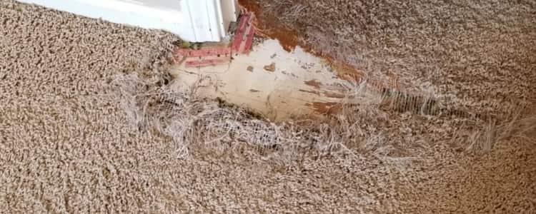 Best Carpet Repair Mulgrave